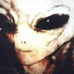 Raza Gris e1332521208313 150x150 - Razas Extraterrestres Negativas