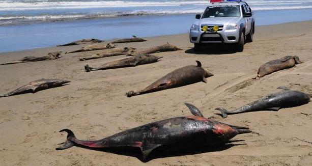 Delfines muertos en perú