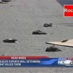 pajaros muertos texas e1335884209610 150x150 - Mas Muertes Masivas de Animales, Ahora en Perú