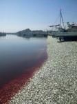 200 toneladas sardinas muertas