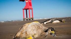 Nuevas muertes masivas de animales, ahora en Brasil