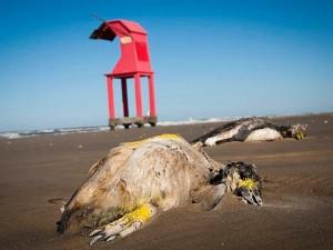 Muertes de animales masivas en Brasil