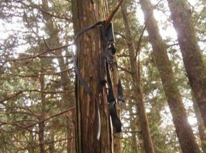 Restos de los suicidios en Aokigahara