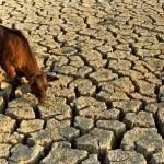 La escasez de alimentos obligará al mundo al vegetarianismo en el 2050