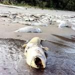 Siguen las muertes masivas de animales, y ahora en Canadá