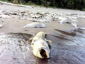 Otra vez mas muerte masiva de animales, en Canadá