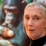 Jane Goodall afirma que el Bigfoot existe