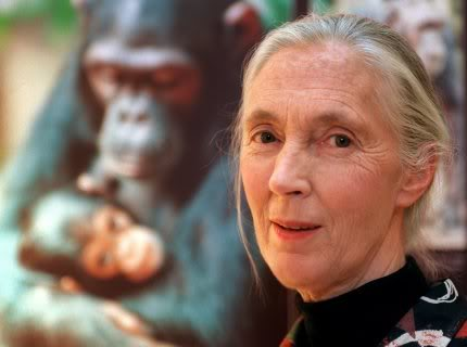 Jane Goodall afirma que el Bigfoot existe1 - Jane Goodall afirma que el Bigfoot existe