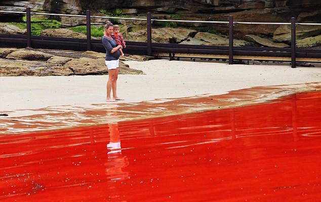 Marea roja en las playas de australia