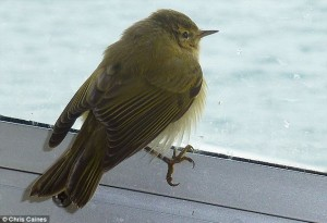 Miles de aves migratorias muertas en inglaterra