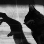 Gatos Negros, ¿mascotas del diablo?