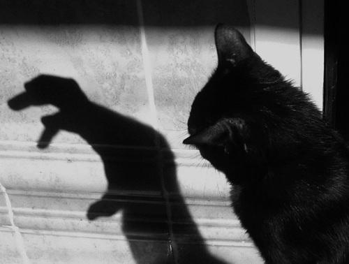 Gatos Negros mascotas del diablo Gatos Negros, ¿mascotas del diablo?