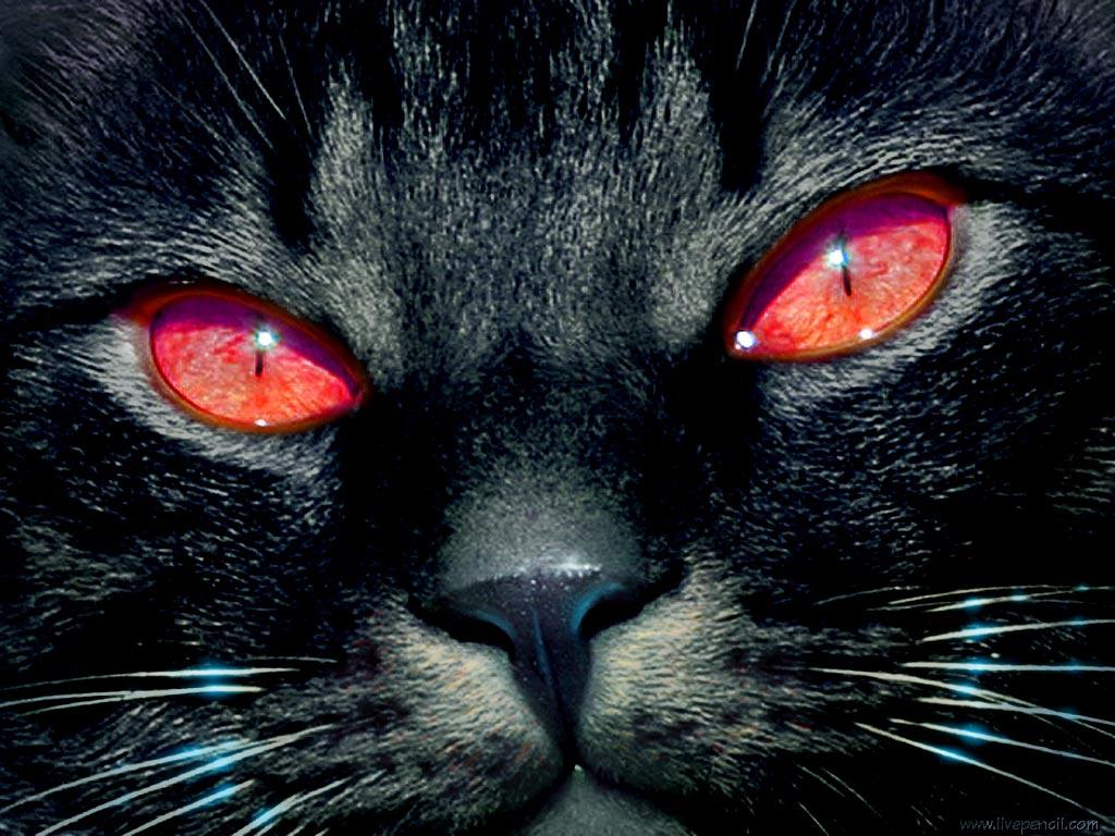 La superstición de los gatos negros por el mundo