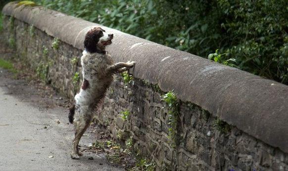 Overtoun fenomeno paranormal e1356229879271 - El puente Overtoun, el fenómeno de los perros suicidas