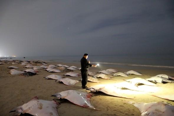 Mantarrayas muertas en las playas de Gaza