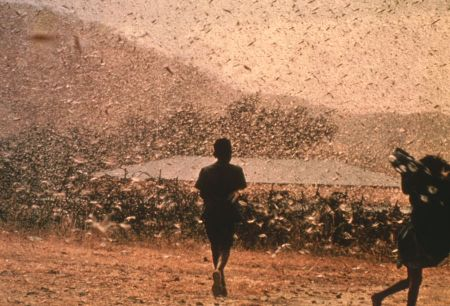 Langostas en Egipto - Inusual plaga de langostas en Egipto, ¿señales del apocalipsis?