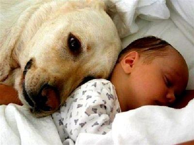 Las mascotas nos protegen
