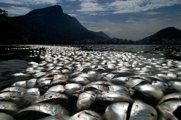 Miles de peces muertos en Brasil