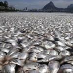 Miles de peces muertos en una laguna de Brasil