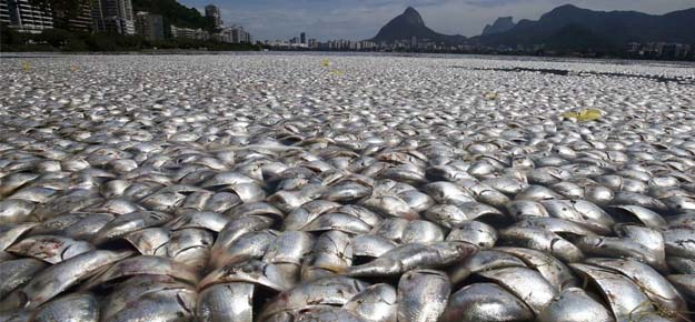 Miles de peces muertos en una laguna de Brasil - Miles de peces muertos en una laguna de Brasil