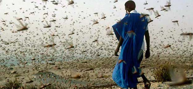 Resultado de imagen de plaga egipcia langostas