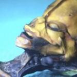 El Dr. Steven Greer aporta una prueba definitiva extraterrestre