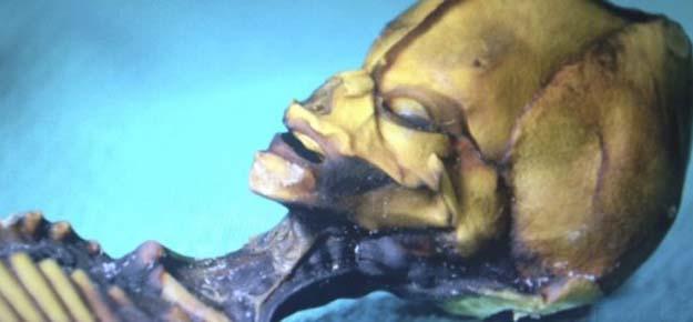 El Dr. Steven Greer aporta una prueba definitiva extraterrestre - El Dr. Steven Greer aporta una prueba definitiva extraterrestre