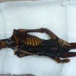 El humanoide de Atacama tiene ADN humano, pero sigue siendo un misterio