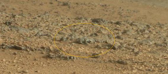 La NASA muestra otra extrana criatura en Marte 567x250 - La NASA muestra otra extra�a criatura en la superficie de Marte