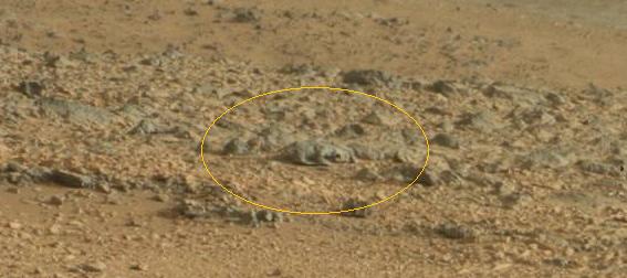La NASA muestra otra extrana criatura en Marte - La NASA muestra otra extraña criatura en la superficie de Marte