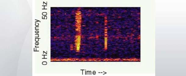 """""""Bloop"""", el misterioso sonido en las profundidades del Pacífico Sur"""
