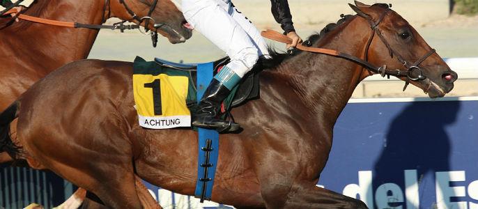 """Achtung - """"Achtung"""", el caballo que consiguió la victoria con la fuerza del más allá"""