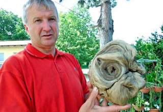"Cabeza extraterrestre 320x220 - Alcalde croata afirma haber encontrado una ""cabeza extraterrestre"""
