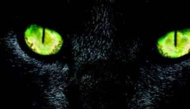 """Pantera Fantasma 384x220 - Las autoridades españolas deciden cerrar un parque natural tras la misteriosa presencia de una """"Pantera Fantasma"""""""