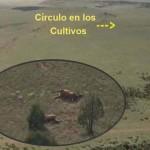 Aparecen en Nuevo México 120 alces muertos cerca de un círculo en los cultivos