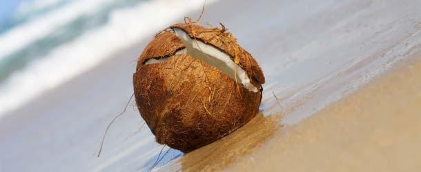 Coco maldito - La policía de las Maldivas contrata expertos en magia blanca para investigar un posible coco maldito