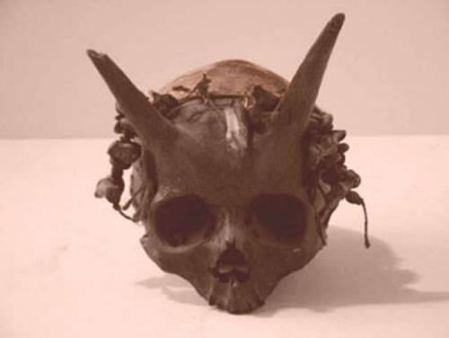 Unicornios humanos - Unicornios humanos, personas descendientes de una antigua raza en la Tierra
