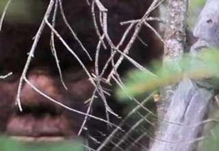 Bigfoot existe 320x220 - La ciencia demuestra que el Bigfoot existe