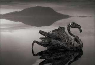 Lago Natron 320x220 - Natron, el lago que convierte a los animales en estatuas
