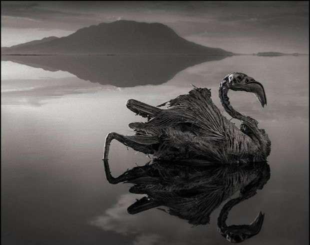 Lago Natron 620x491 - Natron, el lago que convierte a los animales en estatuas