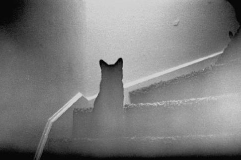 Experiencias Paranormales Con Gatos Fantasma
