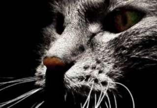 "Gatos fantasma 320x220 - Experiencias paranormales con ""gatos fantasma"""