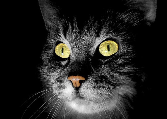 Gatos fantasma paranormales