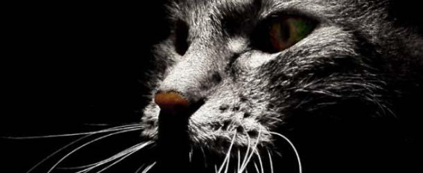 """Experiencias paranormales con """"gatos fantasma"""""""