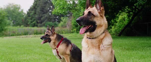 Las capacidades psíquicas de los perros