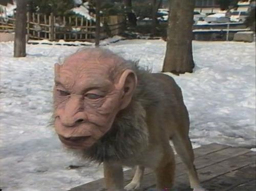 perros rostros humanos japon - Jinmenken, los perros con rostros humanos de Japón