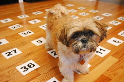 psiquicos perros - Las capacidades psíquicas de los perros