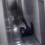 Se reabre el debate sobre el ataque fantasma captado por una cámara de seguridad