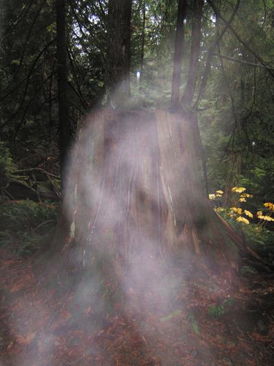 Pueden fantasmas identificados olor