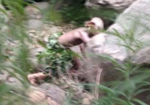 turista chino extrana criatura - Turista chino fotografía una extraña criatura en un valle de Pekín